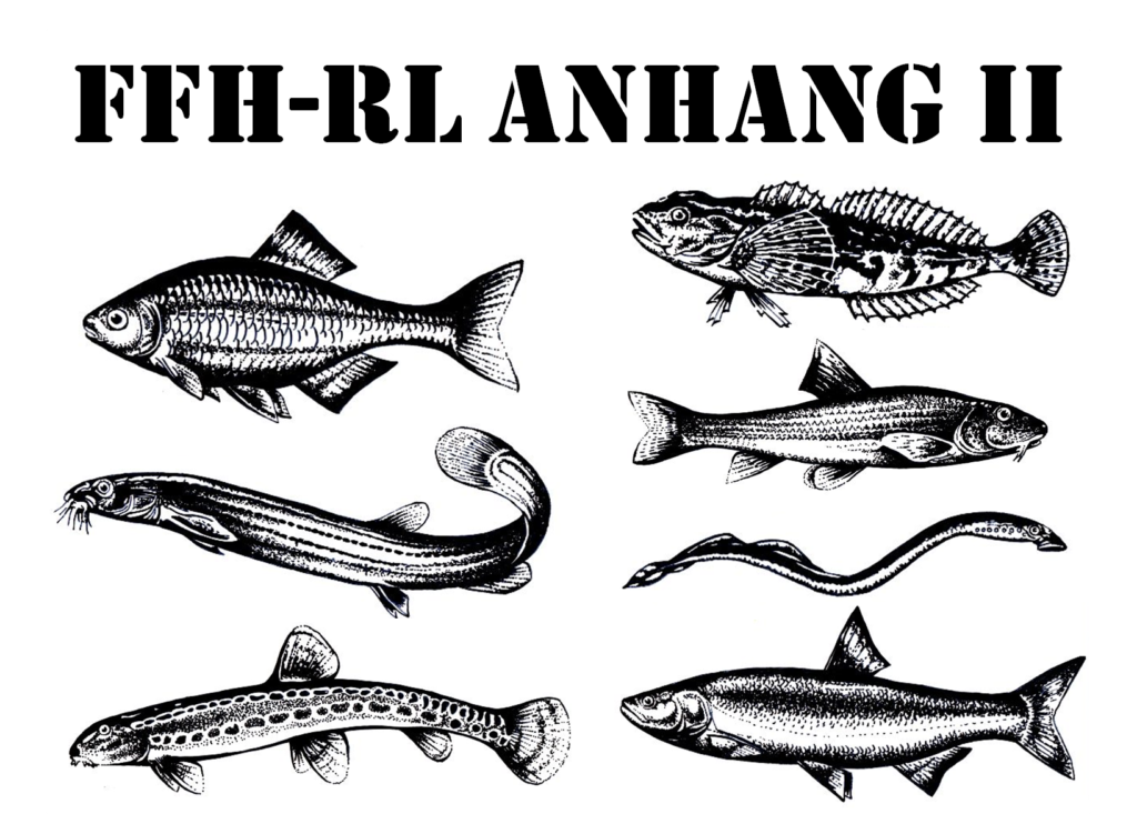 FFH-RL