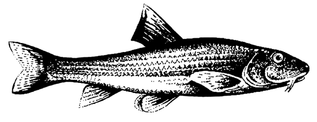 Gründling